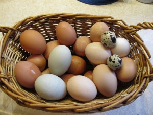 variety of eggs from our farm